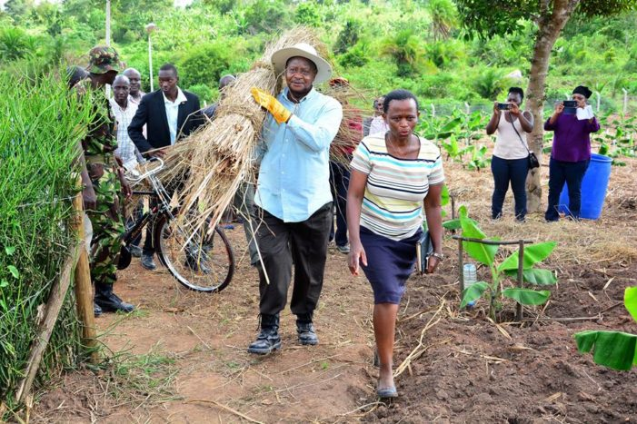President Museveni at his farm